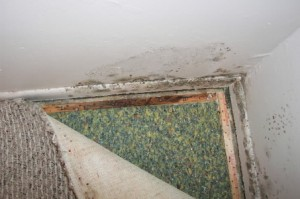 Hunstville Alabama Mold Inspection, Huntsville Alabama Mold Remidiation