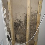 Hunstville Alabama Household Mold Clean up