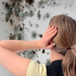The Importance of Huntsville Alabama Mold Remediation